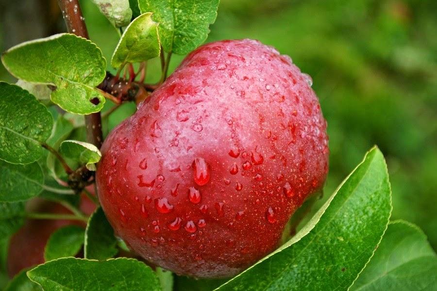 buah buahan yang bermanfaat untuk menjadi cantik alami