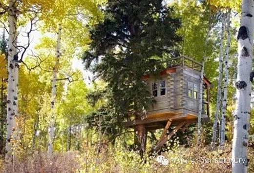 137 HAWA-Rumah Pohon, Tidur di Bawah Langit Berbintang-10