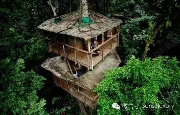 137 HAWA-Rumah Pohon, Tidur di Bawah Langit Berbintang-3