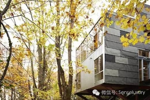 137 HAWA-Rumah Pohon, Tidur di Bawah Langit Berbintang-5