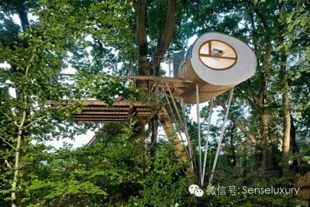 137 HAWA-Rumah Pohon, Tidur di Bawah Langit Berbintang-7