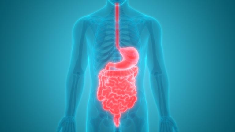 Anatomi-Sistem-Pencernaan-Mengulas-Organ-Pencernaan-dan-Fungsinya.jpg